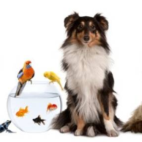 What Your Date's Pet Says About Them